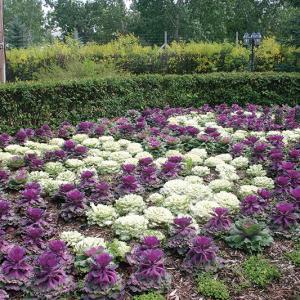 Trochu Arboretum celebrates 30 years
