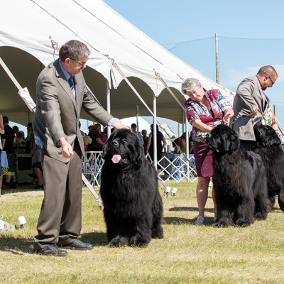 Evelyn Kenny Kennel & Obedience Club comes to Trochu